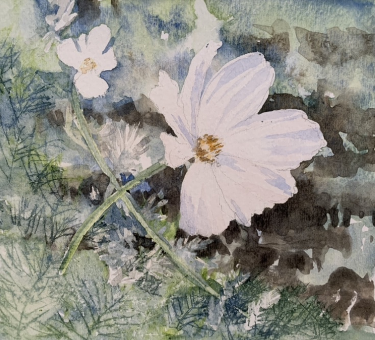 Barbara Stafford - White Cosmos